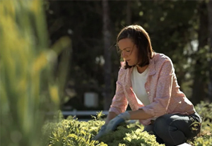 woman tending to herbs