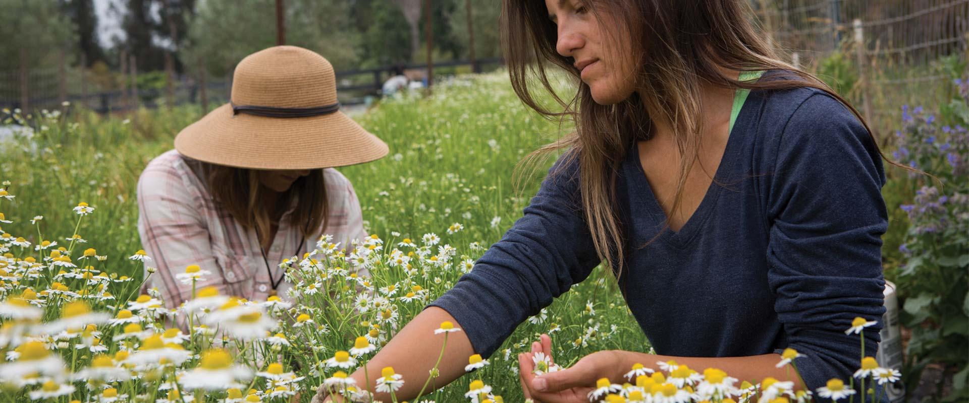 women picking flowers in a field